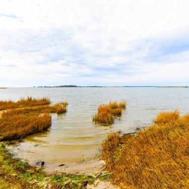 Marsh Exploration Photo