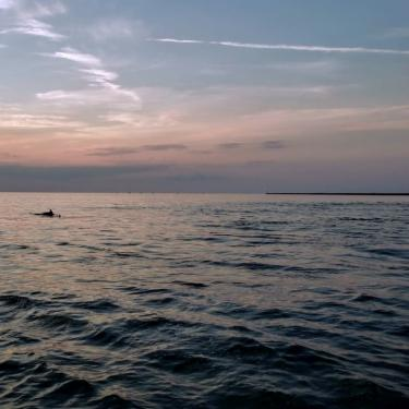 Narrated Dolphin Watching Tour with MERR Institute Photo