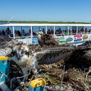Birding by Boat Tour Photo