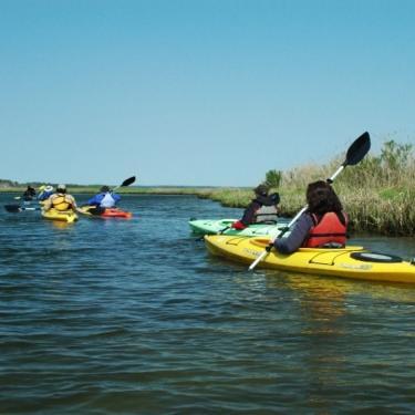 Burton's Island Wildlife Kayak Tour Photo