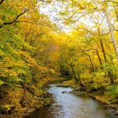 Autumn Leaf Special Train Ride Photo