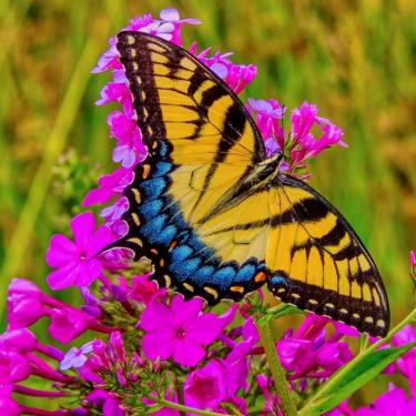 Butterflies of the Delaware Botanic Gardens Photo