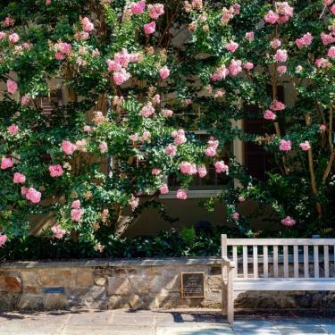 2021 Winterthur Garden Symposium Photo
