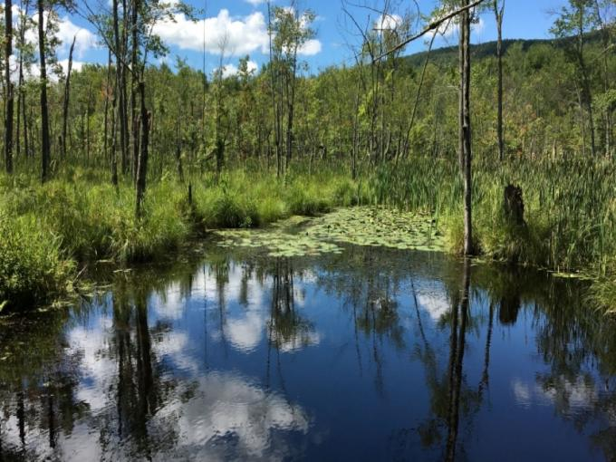 Hike Thompson Island Nature Preserve Photo