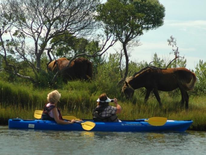 Assateague Island Pony Kayak Tour Photo