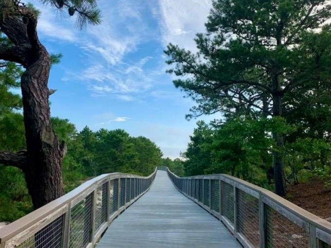 Nature Jogging Photo