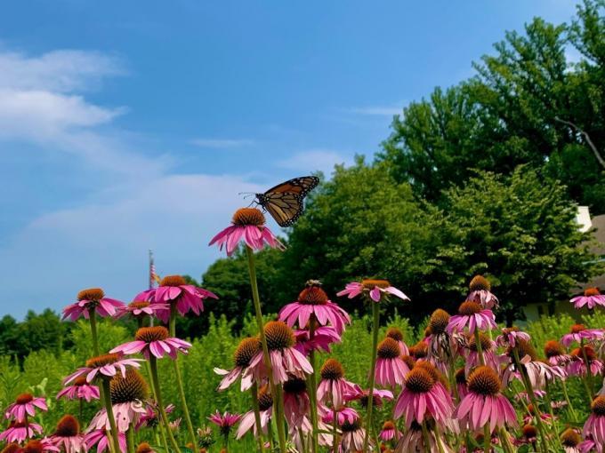 Marvelous Monarchs Photo