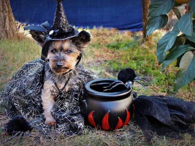 Howl-O-Ween at Hagley Photo